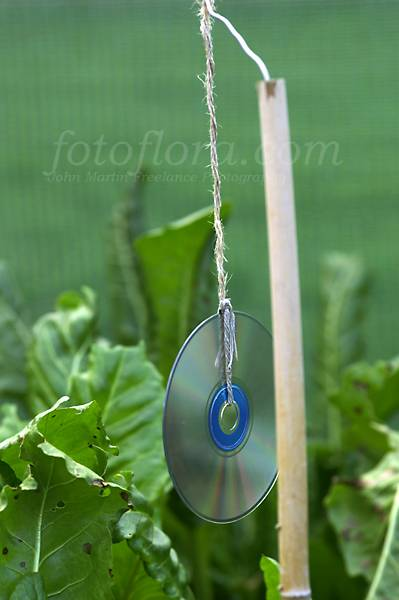 http://www.fotoflora.com/filestore/garden_care/in_the_garden/hanging_cd_bird_scarer_dp15.jpg